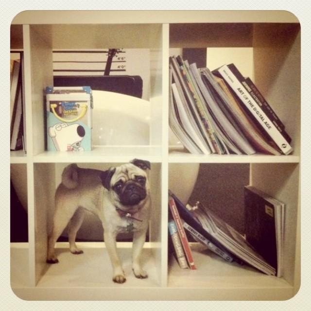 Cameron's dog Panda makes himself at home in the studio