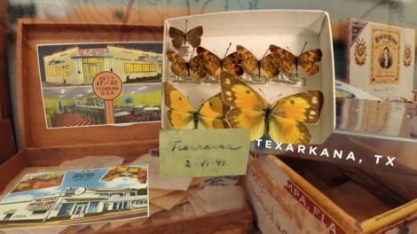Nabokov's Butterflies - Shelf Life 360   AMNH