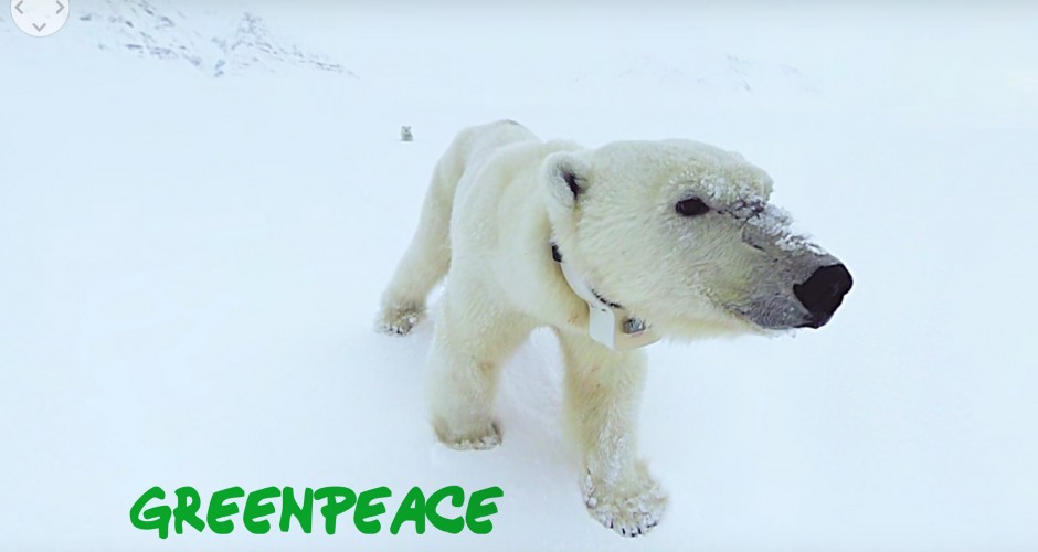 polar-bear-arctic-journey-greenpiece