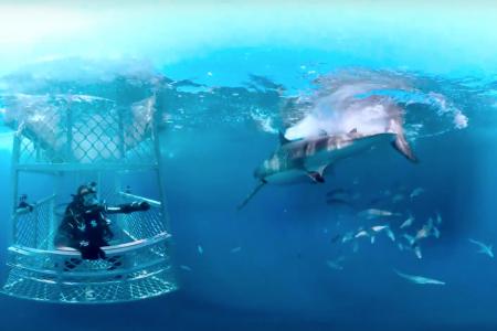 Shark Week 2016   Discovery VR