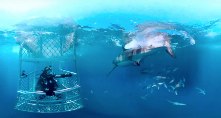 shark-week-discovery-vr