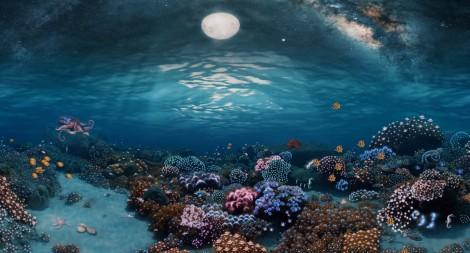 360° Underwater Coral Garden